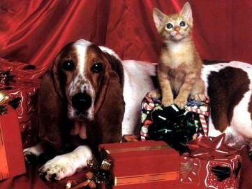 Cani-gatti-Natale